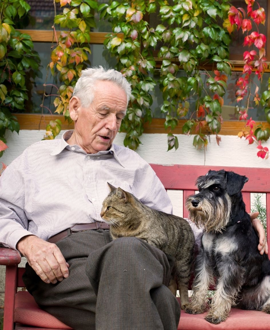 There are many different options for pets for seniors